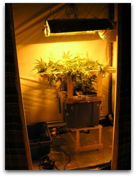 Placard 250W Photo: jujulaweed@cannaweed